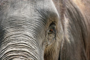 Jeannie Burleson Art - Elephant Eye by Jeannie Burleson