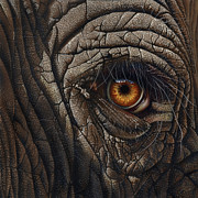 Wildlife Art Paintings - Elephant Eye by Jurek Zamoyski