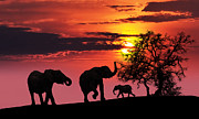 Africa Digital Art Posters - Elephant family at sunset Poster by Jaroslaw Grudzinski