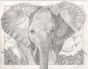 Wildlife Landscape Drawings - Elephant Frolic by Matthew Moore