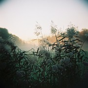 Holga Images Framed Prints - Elephant Grass At Dawn Framed Print by Lynn-Marie Gildersleeve