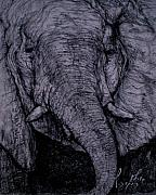 Graphite Pastels - Elephant Head by Arlene Rabinowitz