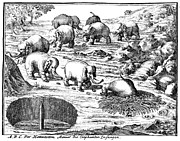 The Cape Posters - Elephant Hunt, 1719 Poster by Granger
