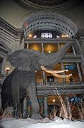 National Museum Of America History Framed Prints - Elephant in the room Framed Print by LeeAnn McLaneGoetz McLaneGoetzStudioLLCcom