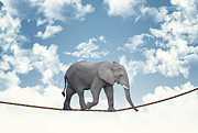 Elephant Prints - Elephant On Rope Print by Gualtiero Boffi