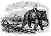 Turban Framed Prints - Elephant Plowing, 1847 Framed Print by Granger