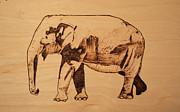 Drawing Pyrography Prints - Elephant Pyrograph Print by Jeremy Cardenas