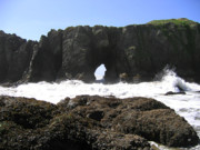 Mussels Photos - Elephant Rock 2 by Will Borden