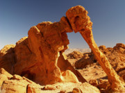 Valley Of Fire Photos - Elephant Rock in the Valley of Fire by Alex Cassels