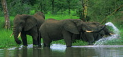 Elephant Photo Posters - Elephant Shower Poster by Bruce J Robinson