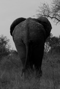 John Bradford - Elephant Tail Gate
