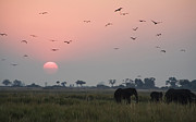 Flock Of Bird Art - Elephants And Birds In Wildlife Refuge by Cultura Travel/Led
