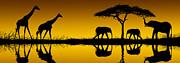 David Davis and Photo Researchers - Elephants and Giraffes at Sunrise