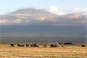 Mt. Kilimanjaro Art - Elephants below Kilimanjaro  by Marie Morrisroe