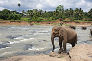 Bathing Metal Prints - Elephants Metal Print by Jane Rix