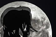 Moonshine Framed Prints - Elephants on Moonlight Walk Framed Print by Kaye Menner