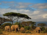 Mickey Mouse Photos - Elephantskenya by Mickey Mouse