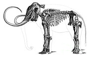 Paleozoology Art - Elephas, Extant Cenozoic Mammal by Science Source