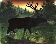 Elk Drawings - Elk at Sunrise by Evan  Jenkins