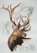 Elk Mixed Media - Elk by Barbara Keith