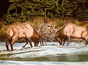 Elk Drawings - Elk Fight by Hilari Alsip