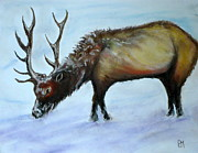 Pastel Portraits Framed Prints - Elk II Framed Print by Pete Maier