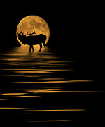 Reflecting Water Mixed Media Posters - Elk In The Moonlight Poster by Shane Bechler