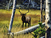 Montana Digital Art - Elk in the Woods by Susan Kinney