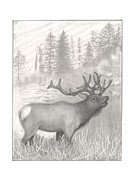 Elk Drawings - Elk by Kathy Burns
