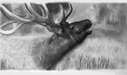 Elk Drawings - Elk on a cold day by Jeff Noble