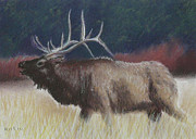 Elk Pastels - Elk by Richard Smith