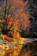 Bakers Island Prints - Elk River Autumn Print by Thomas R Fletcher