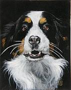 Pet Pastels Originals - Ella the Bernese Mountain Dog by Debra Jones