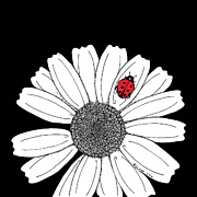 Black Background Drawings - Ellas Daisy by Billinda Brandli DeVillez