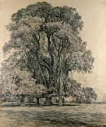 Etching Drawings Framed Prints - Elm trees in Old Hall Park Framed Print by John Constable