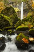 Gorge Photos - Elowah Autumn by Mike  Dawson