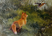 Wild Animals Painting Framed Prints - Eluding the Fox Framed Print by Bruno Andreas Liljefors