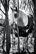 Horse Images Photo Framed Prints - Elusive Framed Print by Toni Hopper