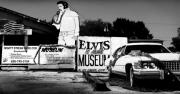 Elvis Photo Metal Prints - Elvis is Alive Museum Metal Print by Todd Fox