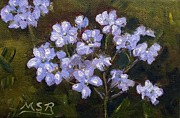Maria Soto Robbins Art - Embeleso Plumbago Phlox by Maria Soto Robbins