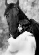 Friesian Photos - Embrace by Jean Hildebrant