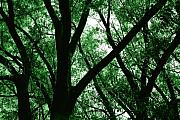 Silhouettes Metal Prints - Emerald Forest Metal Print by Steven Milner
