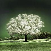 Emerald Meadow Square Print by Hugo Cruz