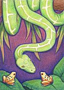 Frog Drawings - Emerald Tree Boa by Amy S Turner