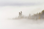 Fog Photo Prints - Emergence Print by Mike  Dawson