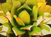 Cactus Prints - Emergence Print by Robert Hooper