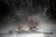Fog Mist Prints - Emergence Print by Skip Willits