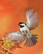 Backyard Birds Prints - Emergency Landing Print by Gerry Sibell