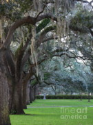 Oaks Framed Prints - Emmet Park in Savannah Framed Print by Carol Groenen
