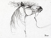 Horse Drawing Posters - Emon Polish Arabian Horse Drawing Poster by Angel  Tarantella